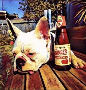 French bulldog with beer faking being drunk